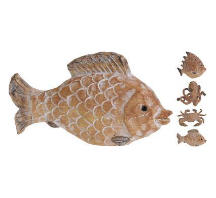 Animal de Mer Maroc
