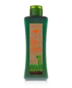 Shampooing Cheveux Traités 300 ml Maroc
