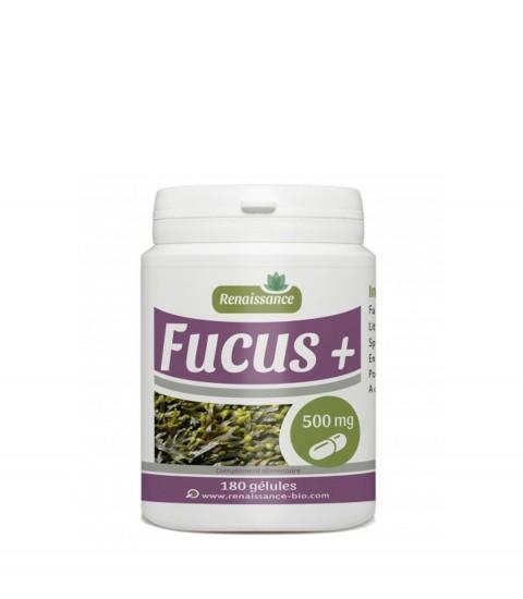 focus 180 gélules Maroc